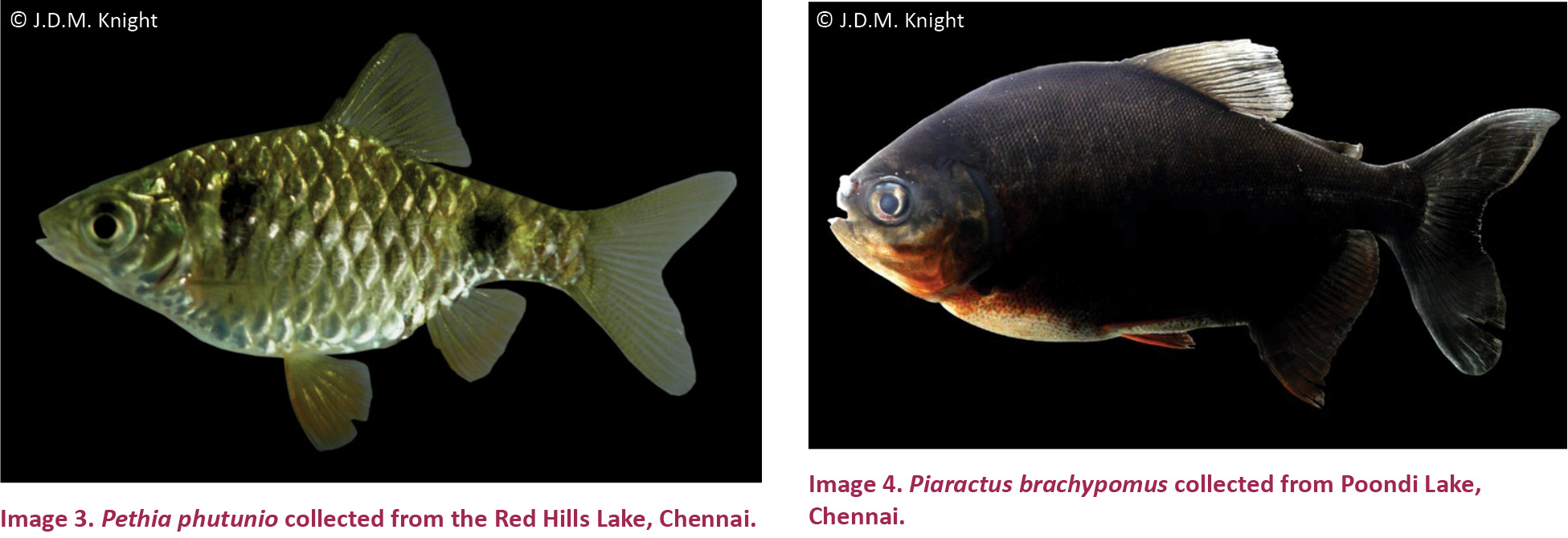 Fish Aquarium In Coimbatore - The propagule pressure theory clearly demonstrates the relationship between the frequency of fish sold in aquarium stores and their introduction and